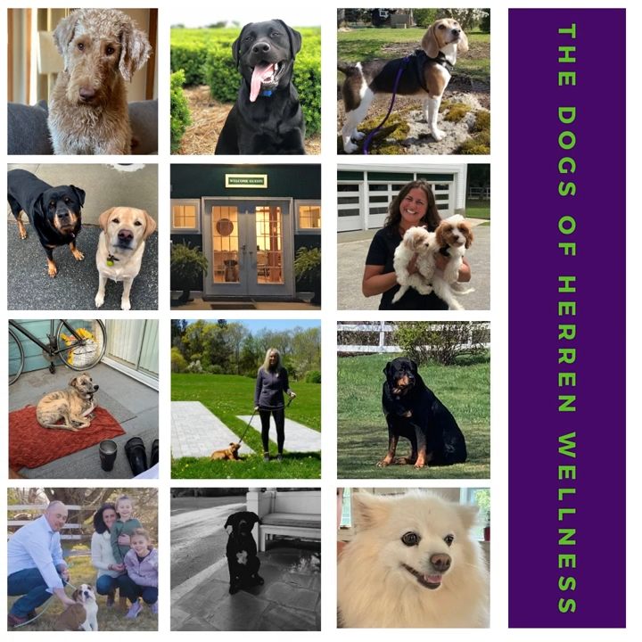 The Dogs of Herren Wellness: How Pets Bring Healing, Unconditional Love, and Companionship in Recovery